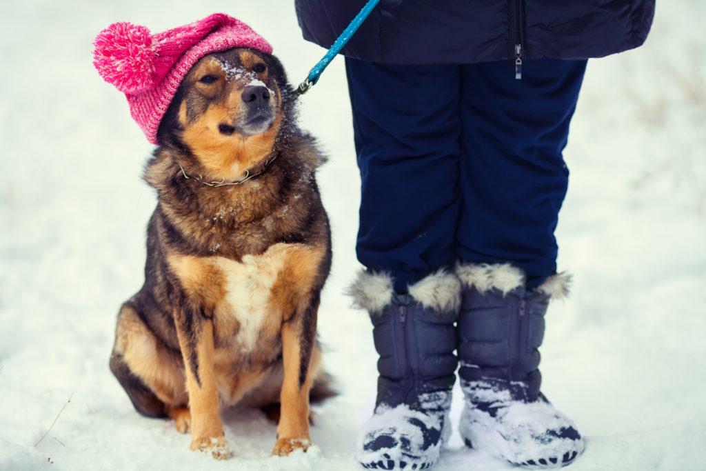 Myssypäinen koira istuu lumessa vierellään taluttaja.